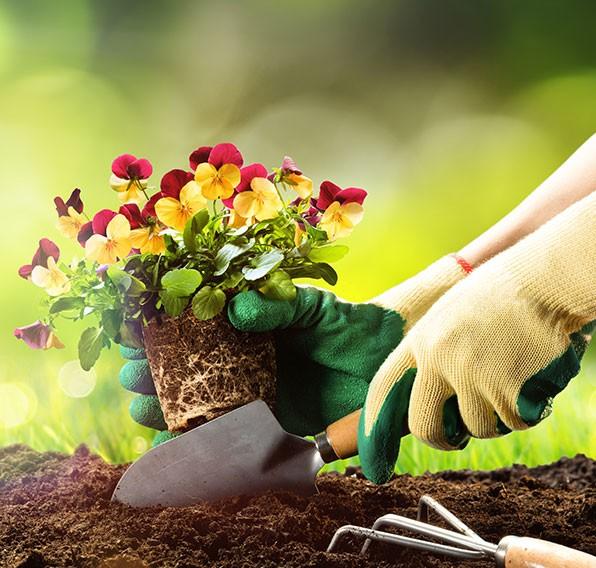achat de plante et d'arbre