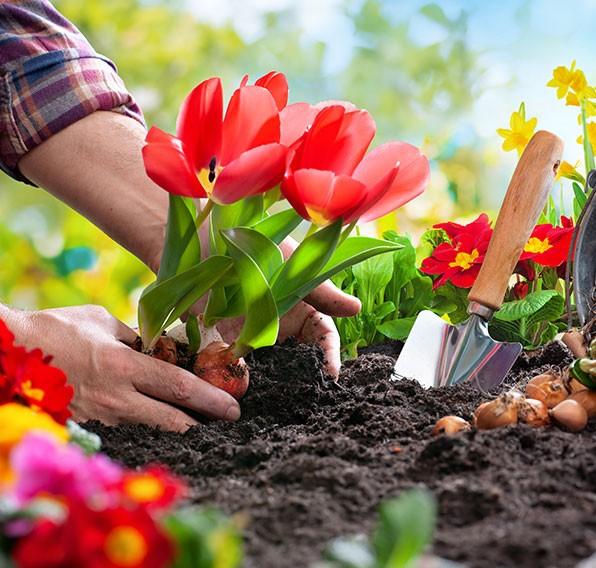 faire un jardin de fleurs