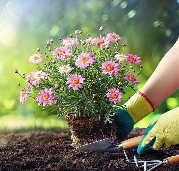 jardinerie de Brive-la-Gaillarde