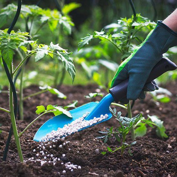 engrais pour plante verte